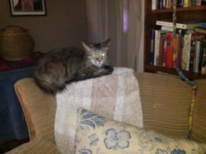 babycat1