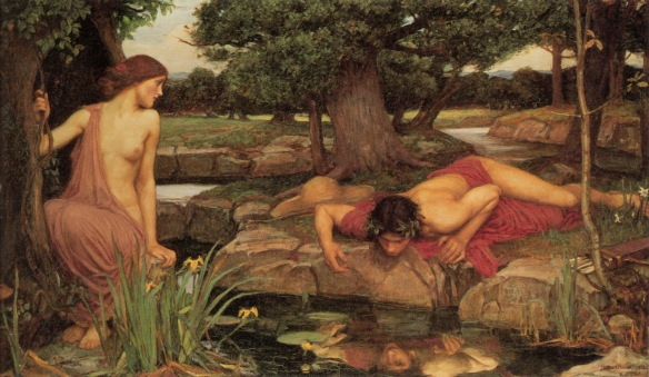 narcissus2_andecho