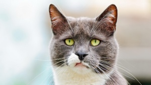 annoyedcat