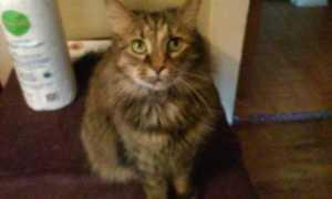 babycat4