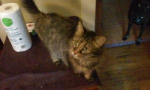 babycat6