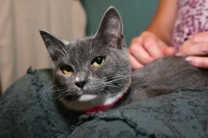 grey_kitty