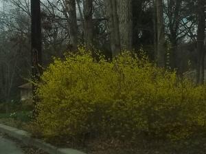 spring322-3