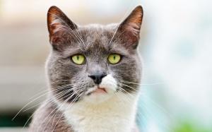annoyed_cat