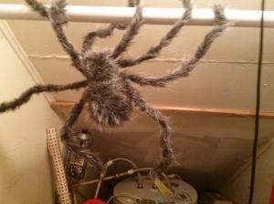 closet_3_spider
