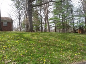 spring4_5_2