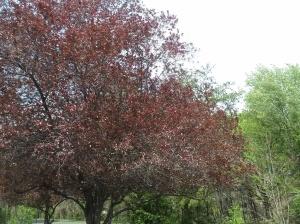spring_412_11