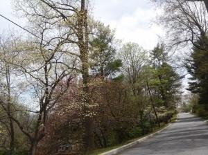spring_412_4