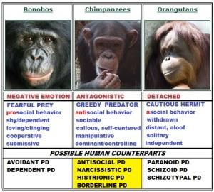 Primates_chimps