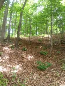 woods_1