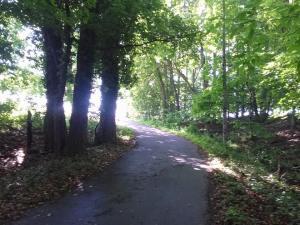 woods_3