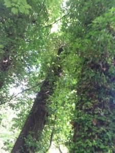 woods_4
