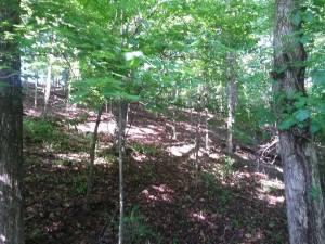 woods_5