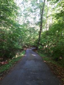 woods_6