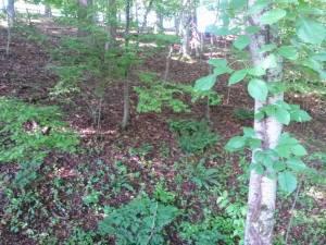 woods_7