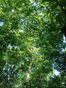 woods_8
