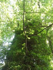 woods_9