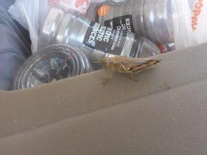 one_legged_grasshopper3