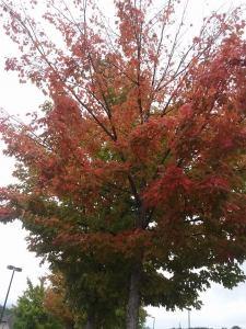 fall_sep27_1