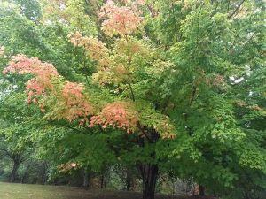 fall_sep27_2