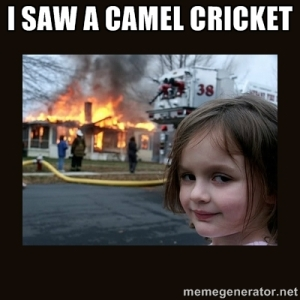 camel_cricket_firestarter
