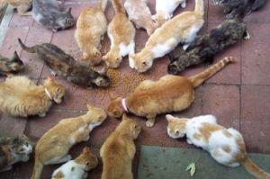 cat_hoarding1