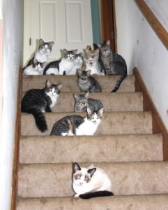 cat_hoarding2