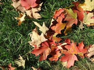 fall_oct17_1