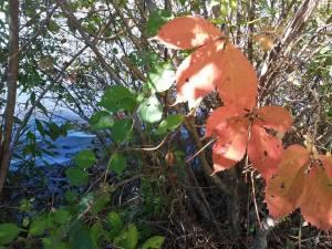 fall_oct17_4