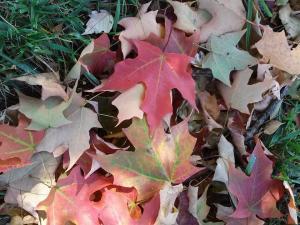 fall_oct17_5