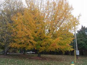 fall_oct24_1