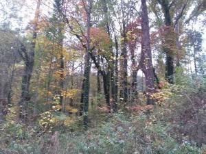 fall_oct24_2