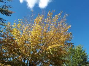 fall_oct7_1