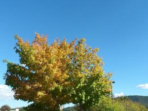 fall_oct7_2