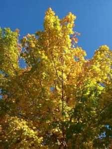 fall_oct7_3