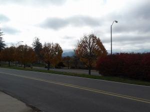 fall_nov5_3
