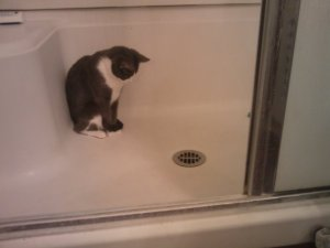 cats_and_drains
