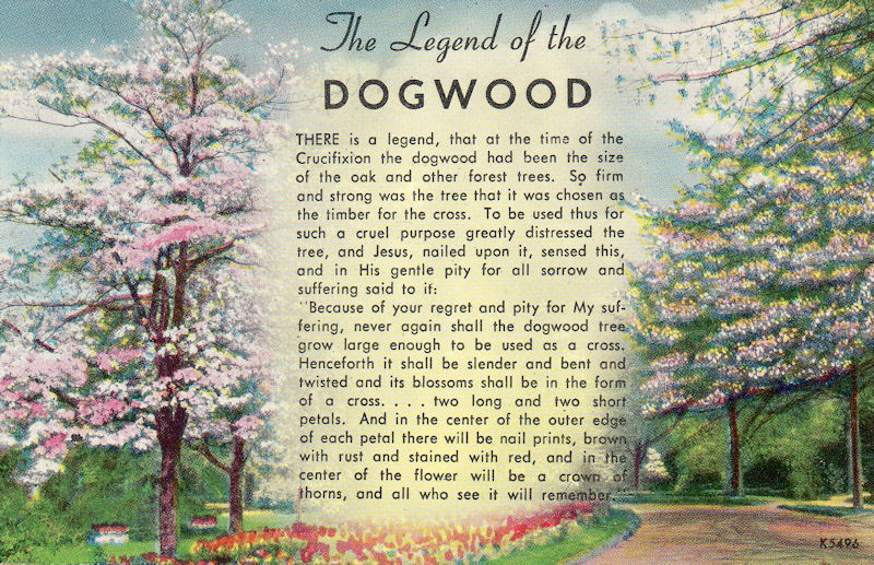 Lucrative image pertaining to legend of the dogwood tree printable