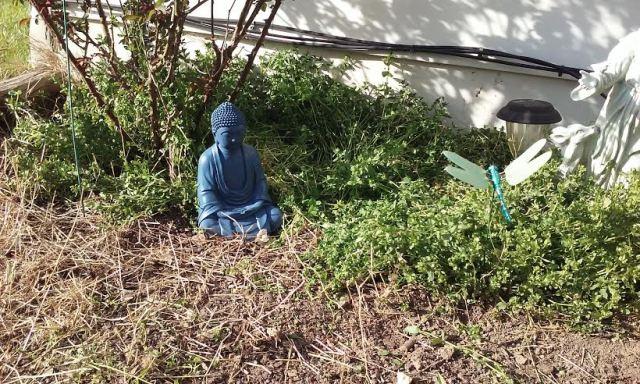garden_buddha2