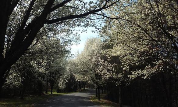 spring2016_2