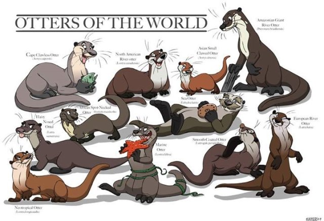 world_otters