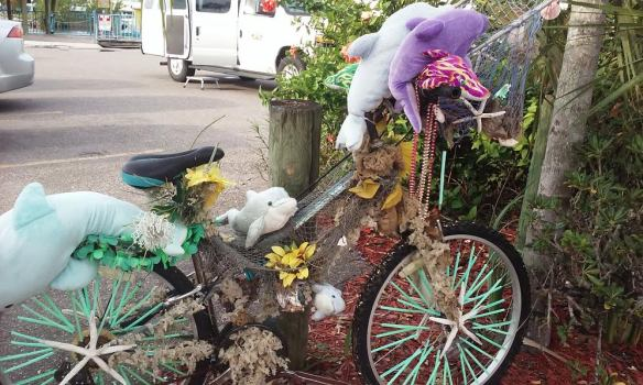 dolphin_bike