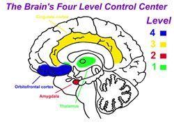 brain4levels