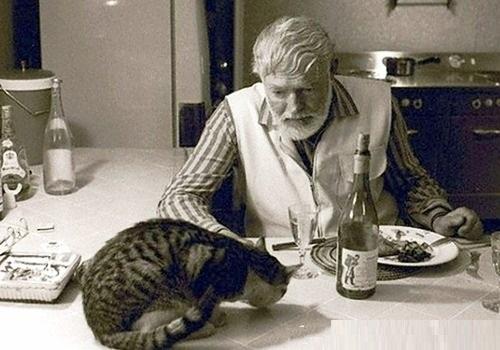 hemingwayandcats