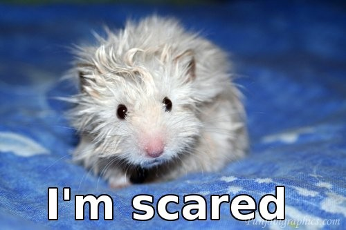 scared_mouse