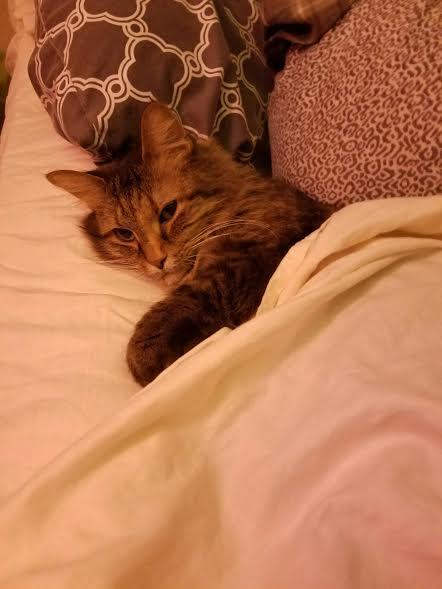 babycat_120916