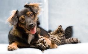 happy_pets