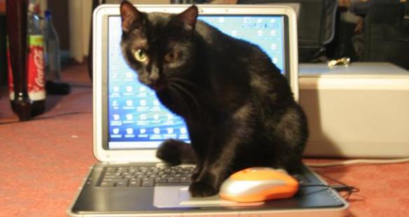 cat_on_laptop