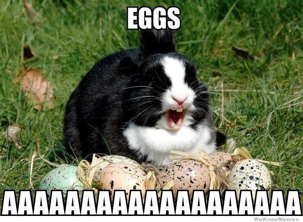 easter-bunny-meme-eggs