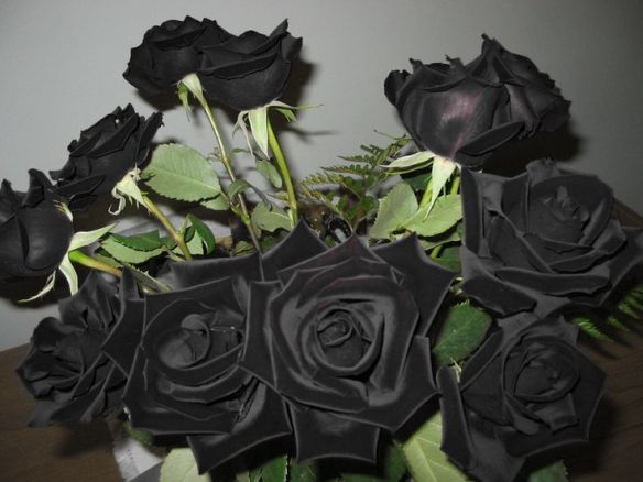 blackroses2